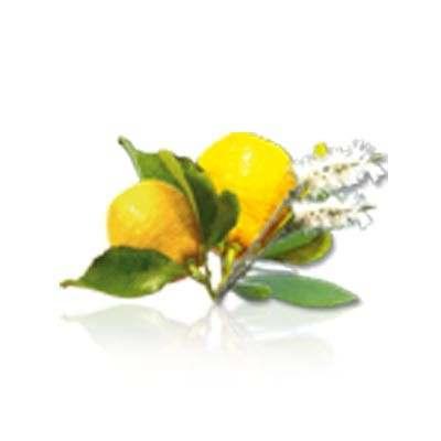 Cajuput/Lemon